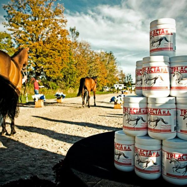 Using Integricare TRI-ACTA H.A. for horses