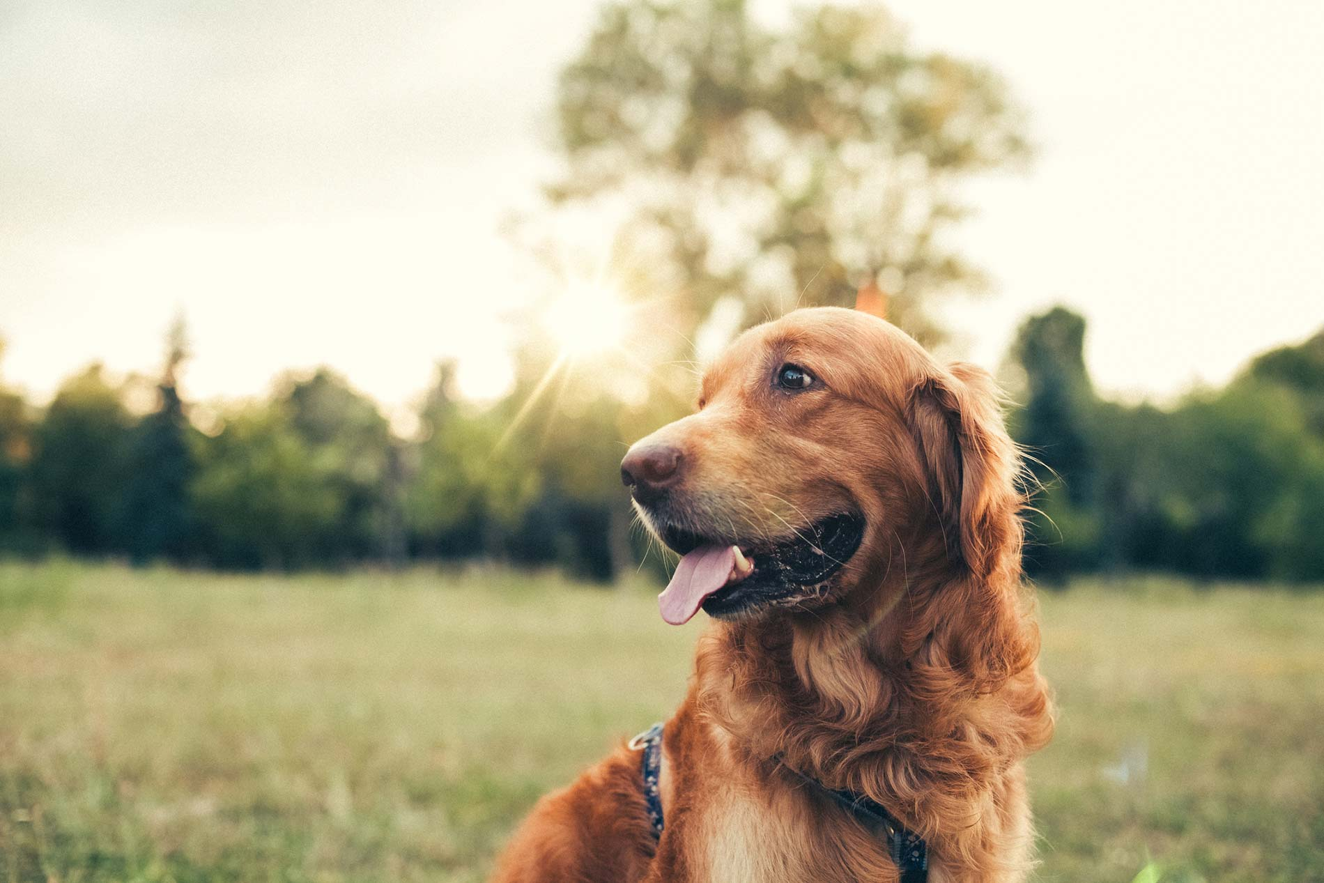 Pet Supplements for Dogs