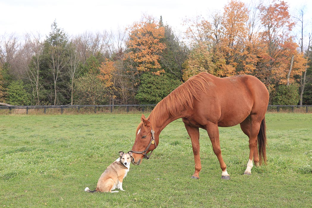 Integricare Horse and Dog