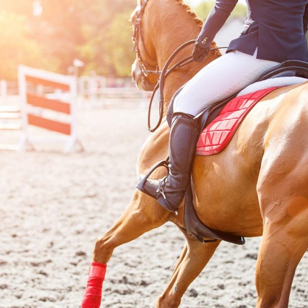 Equine Supplement for Sport Horse