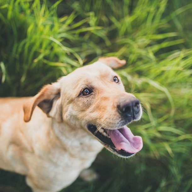 Pet Supplements for Hip Dysplasia in Dogs