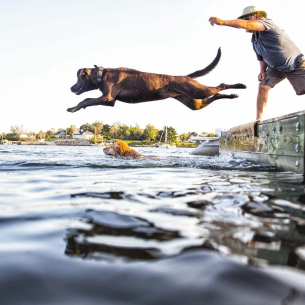 Pet Products for active pets