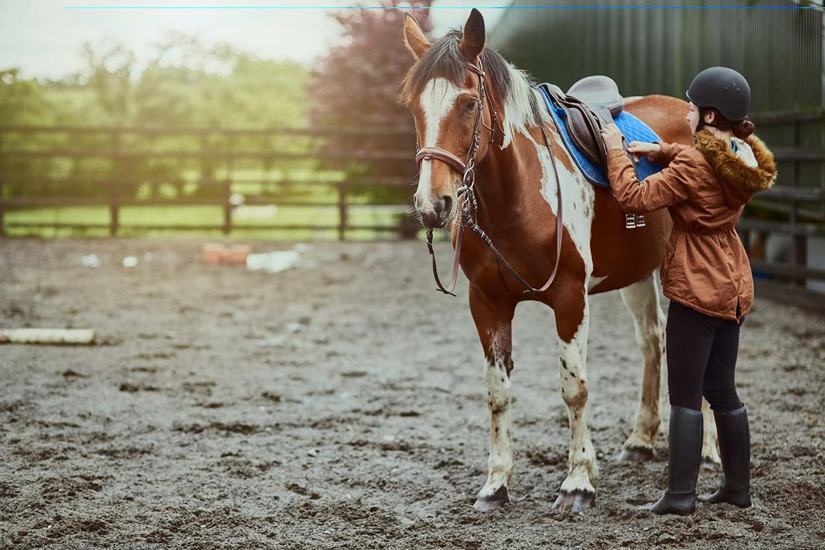 Equine Supplements for Leisure horses