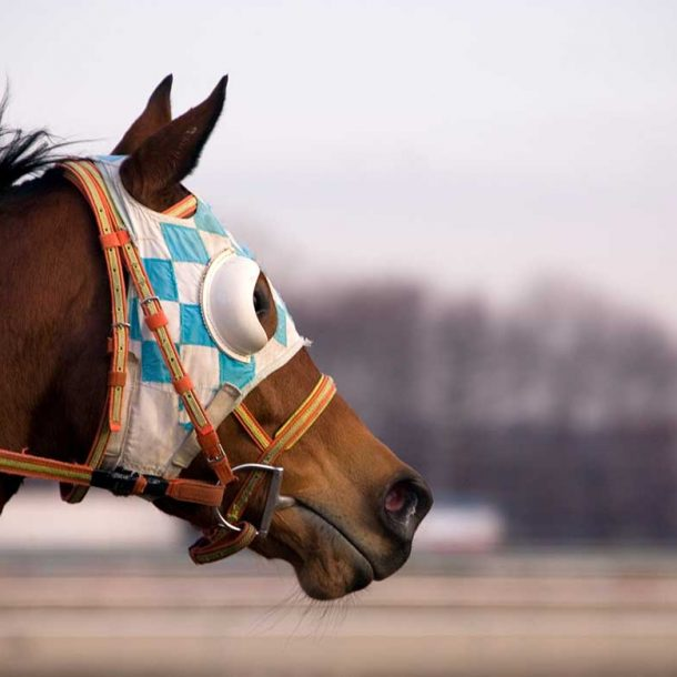 Equine Supplements for Sport Horse Injury Prevention