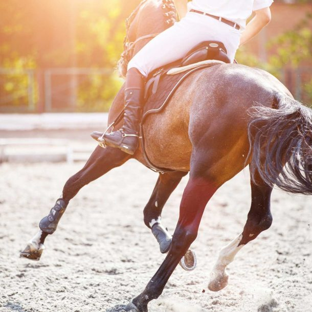 Equine Supplements for Sport Horse Performance