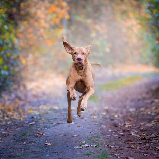 Pet Supplements for Strains and Injury