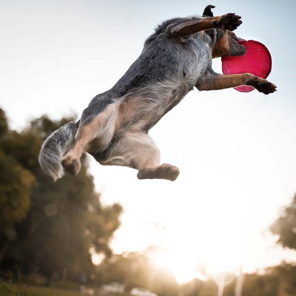 Pet Supplements for Ligament Strains and Injury