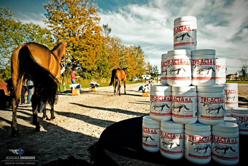 horses-training-by-triacta-supplements