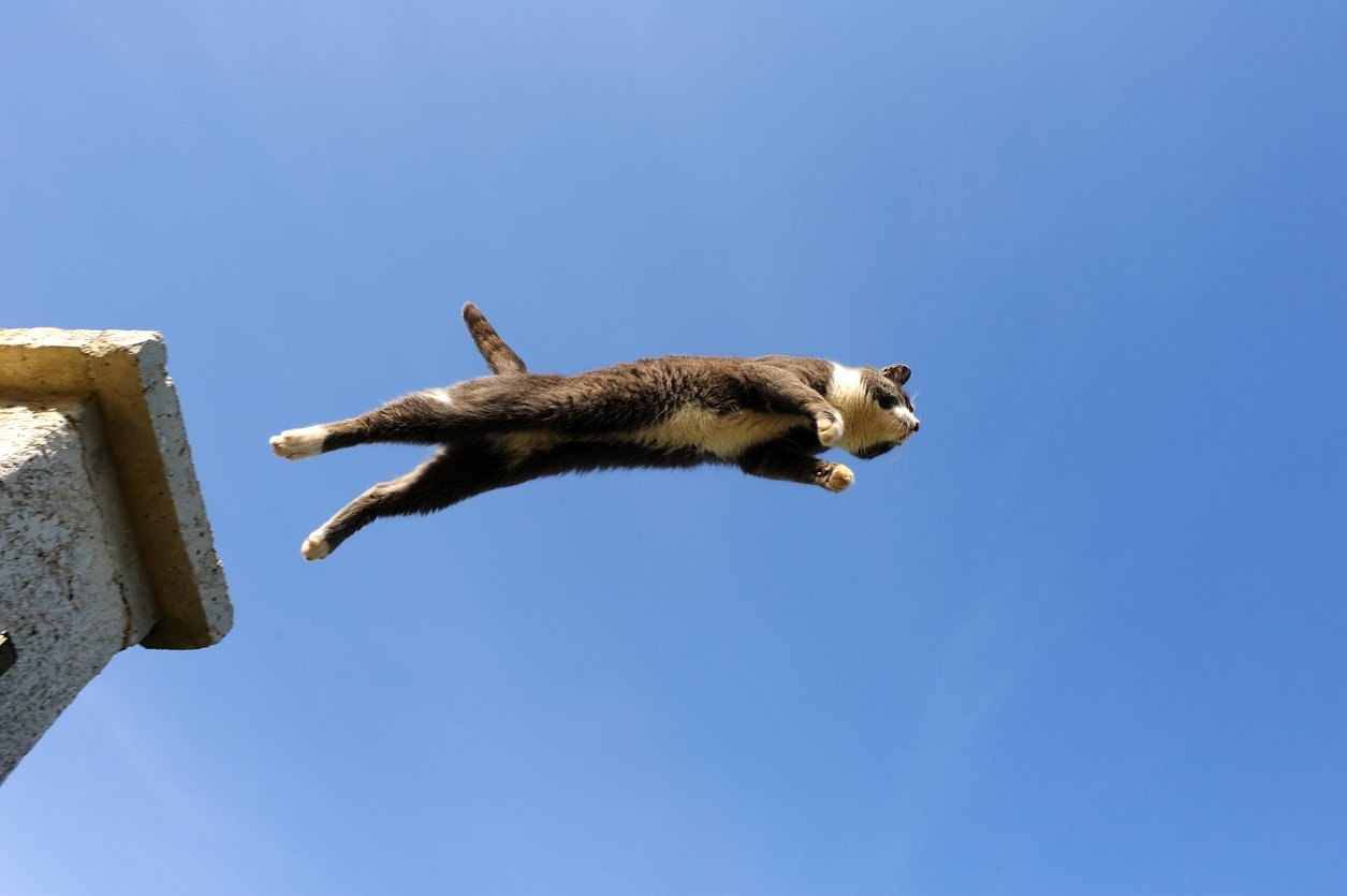 cat jumping from heights straining muscles