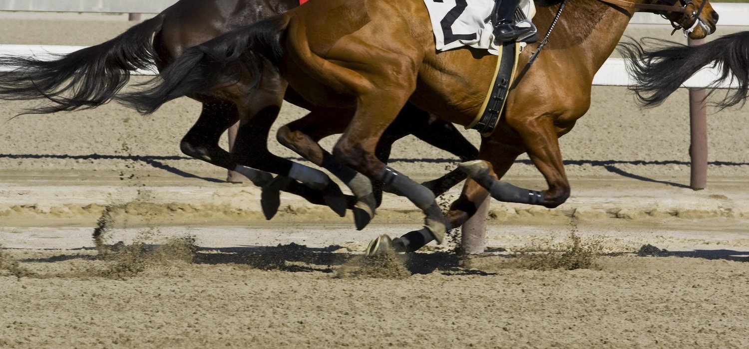 sport-horse-racing-competition