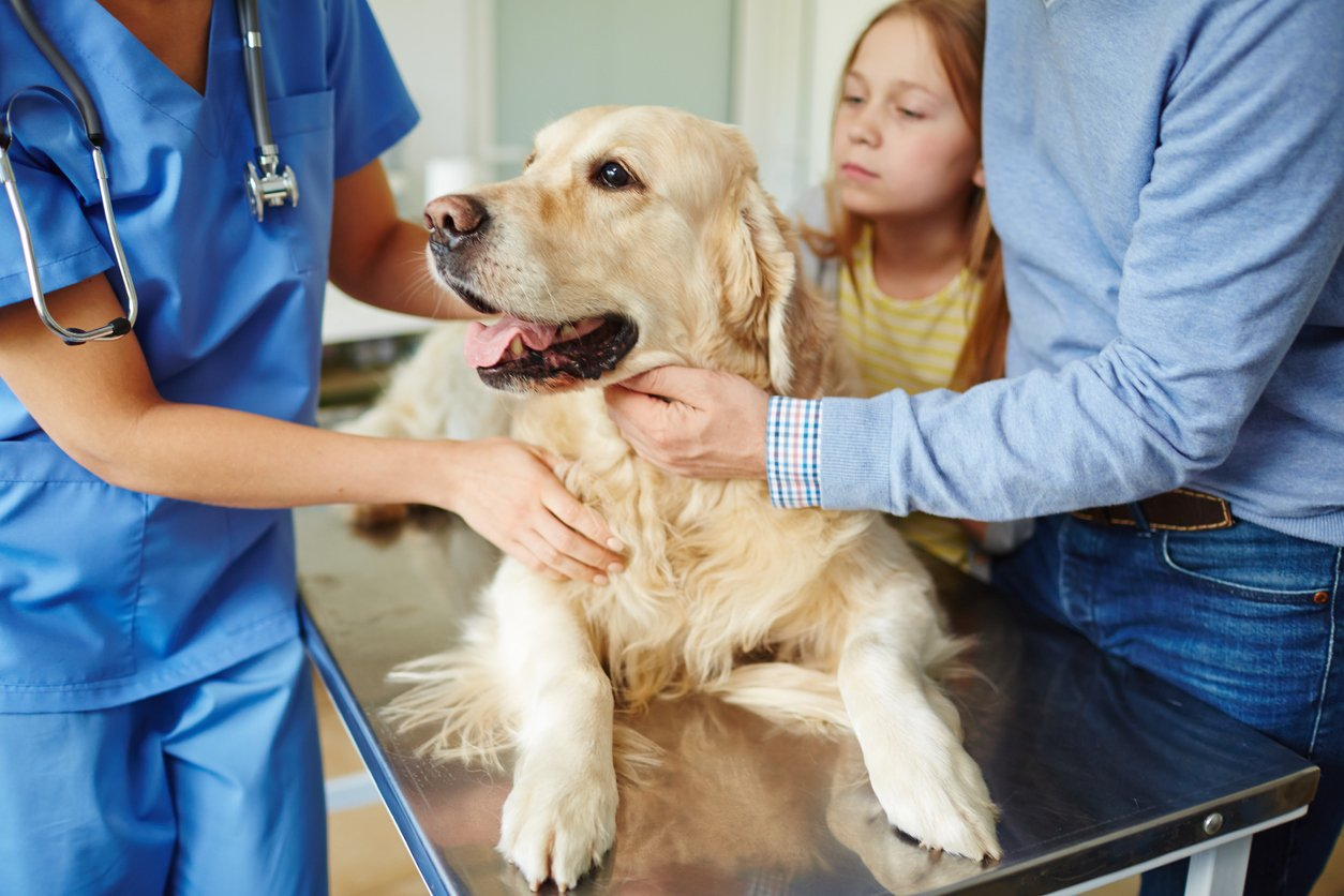 pet health issues in dogs