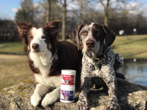 two-medium-dogs-with-triacta-glucosamine-for-dogs