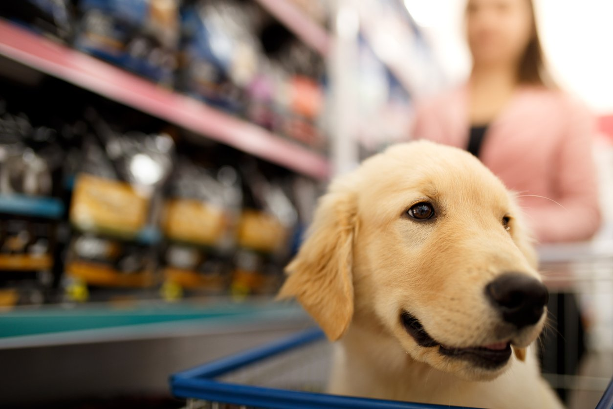 where to purchase canine glucosamine