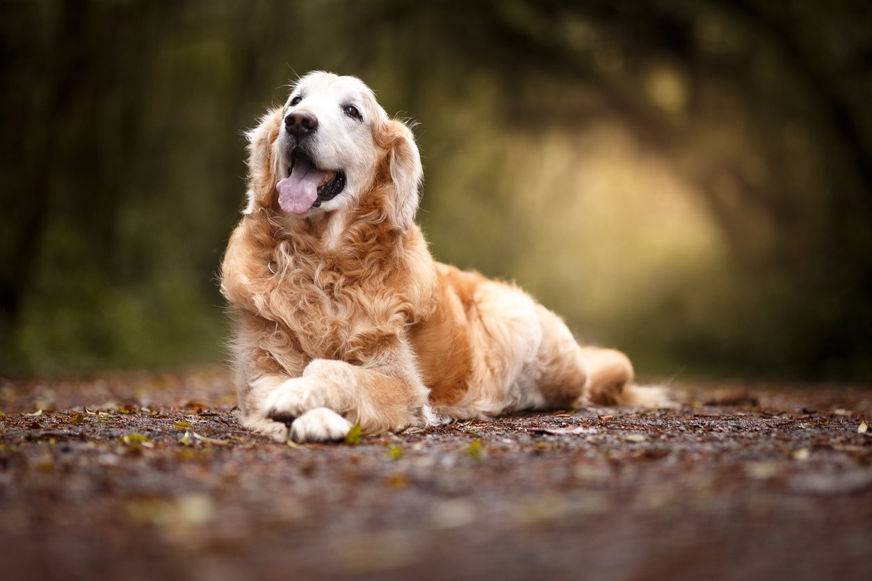 joint supplements for senior dogs
