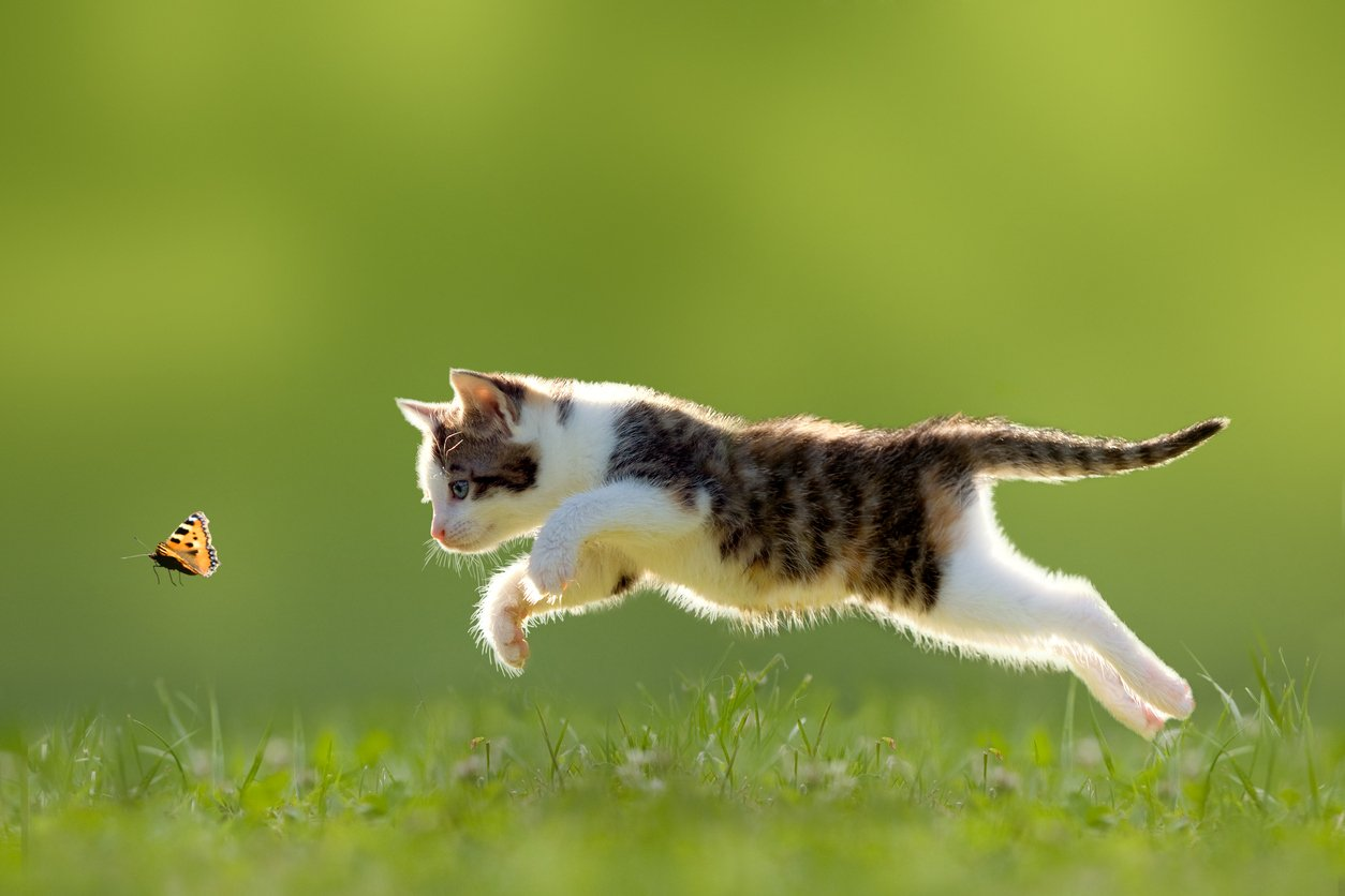 overly active cat