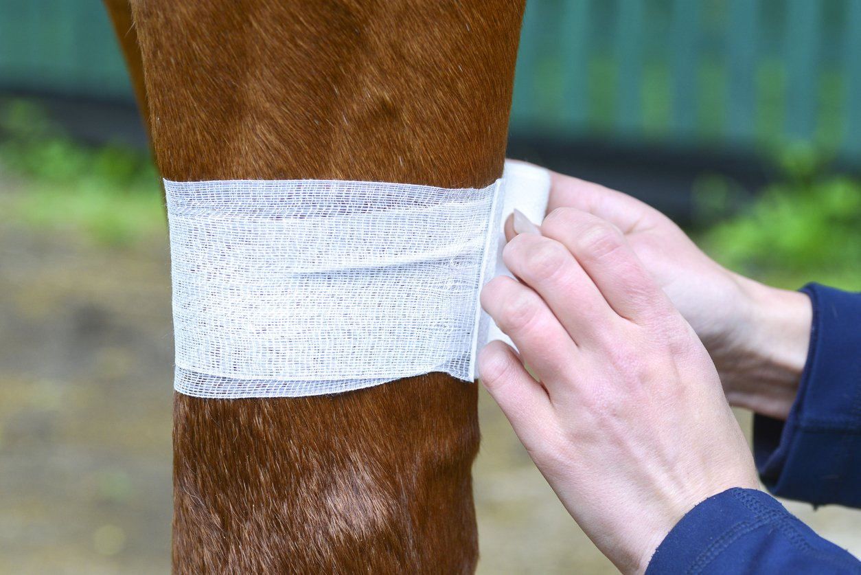horse joint issue