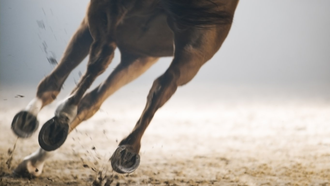 equine joint lubrification